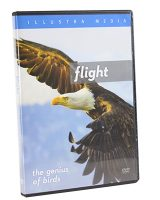 Flight: The Genius of Birds (DVD)